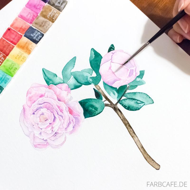 Aquarellblumen Rosa Pfingstrose | Farbcafe.de